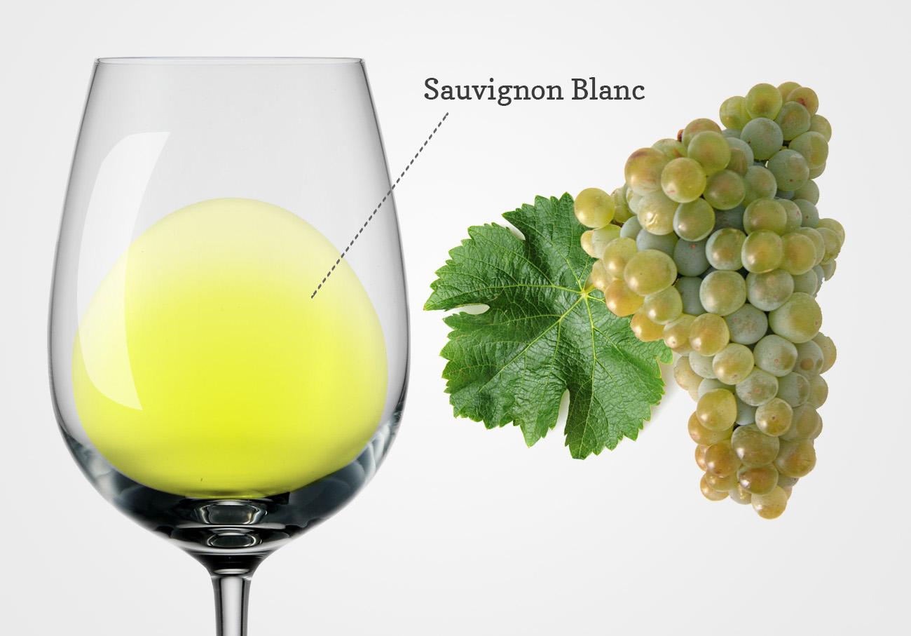 Tìm Hiểu Về Giống Nho Sauvignon Blanc